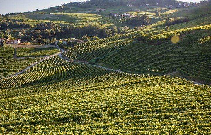 La Collina Di Dioniso - Fabio Oberto - landscape